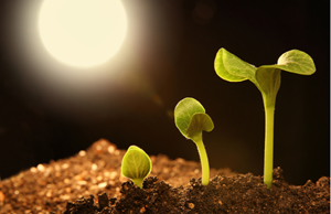 Preparing for the Green Shoots of Recovery: How Marketing Must Prepare