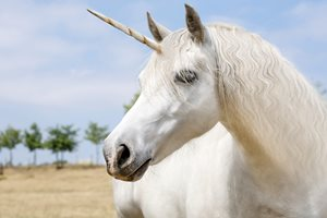 Digital Marketing Brain Training Exercises To Become A Unicorn