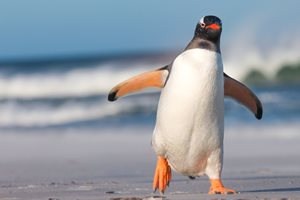 What Does Google's New Penguin 4.0 Algorithm Update Mean for the World of SEO?