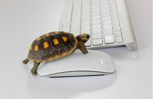 How Slow Website Performance Affects Conversion Rates
