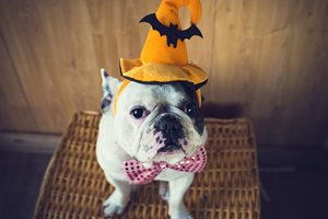 Why Halloween is the Future of Marketing