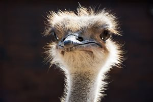 What Can The Samsung Ostrich Teach Content Marketers About Storytelling?