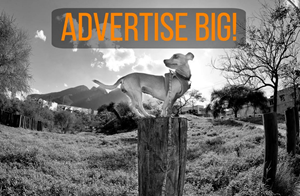 4 Ways Your Small Business Can Advertise Like The Big Guys