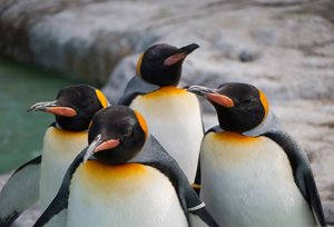 What Google's Penguin 4.0 Update Means for Your Site's Search Results